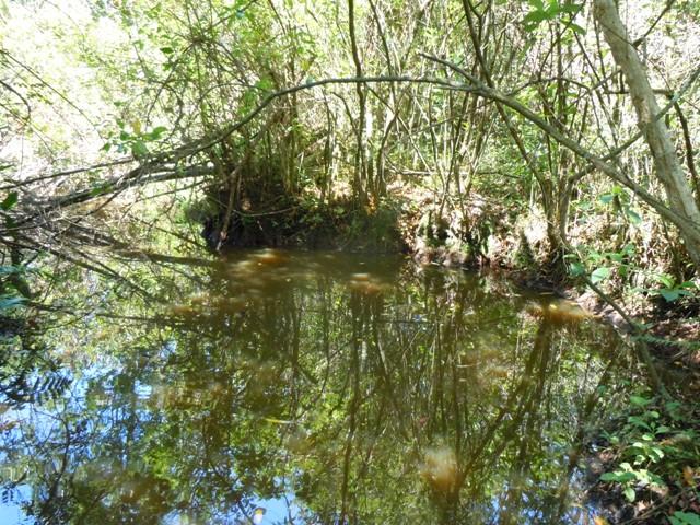 Lagoa com pererecas e peixes que parece ter saído de uma São Paulo de 200 anos atrás.
